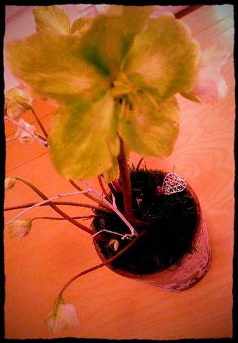 365Foton: vinterblommor