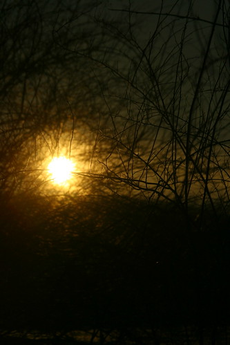 sunset sun nature digital canon dark landscape eos rebel xt branches views comments wineter throughthebranches lamndscape