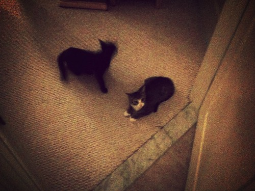 Opened bathroom door, found kittens waiting patiently outside for me to finish
