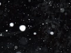 snowfall by Teckelcar