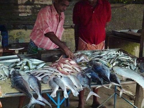 Vendedores de pescado. India