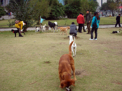china park dogs nanan yibin