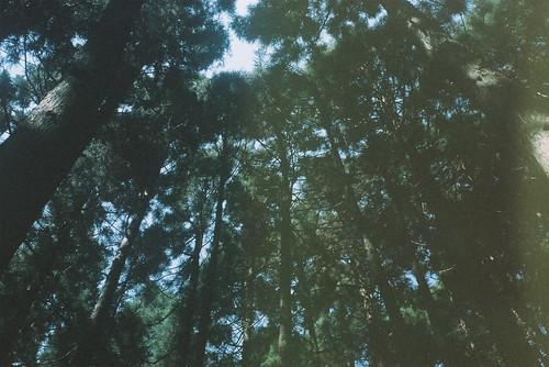 [フリー画像素材] 自然風景, 森林, 緑色・グリーン ID:201302031200