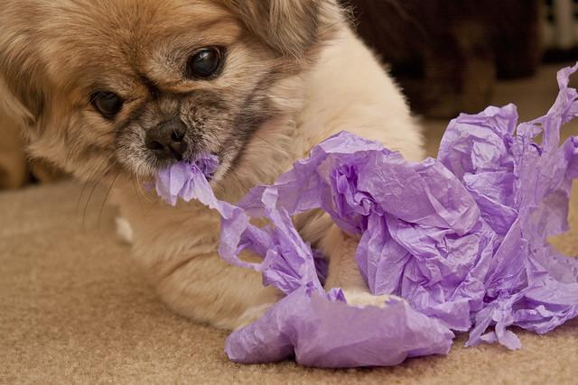 ali ripping tissue paper