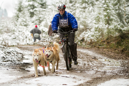 Sled snow dogs race