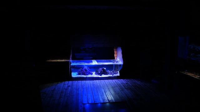 Aauarium