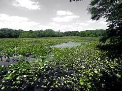 Morgan Days Park - Smith Pond (5)