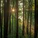 122: Light in the deep woods by JKLsemi