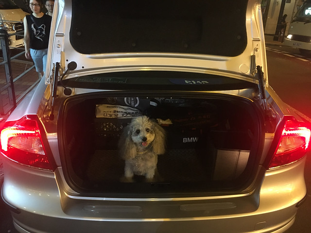 Doggie in the boot