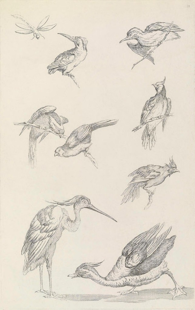 illustration of birds from Huquier's book on Chinese bird species