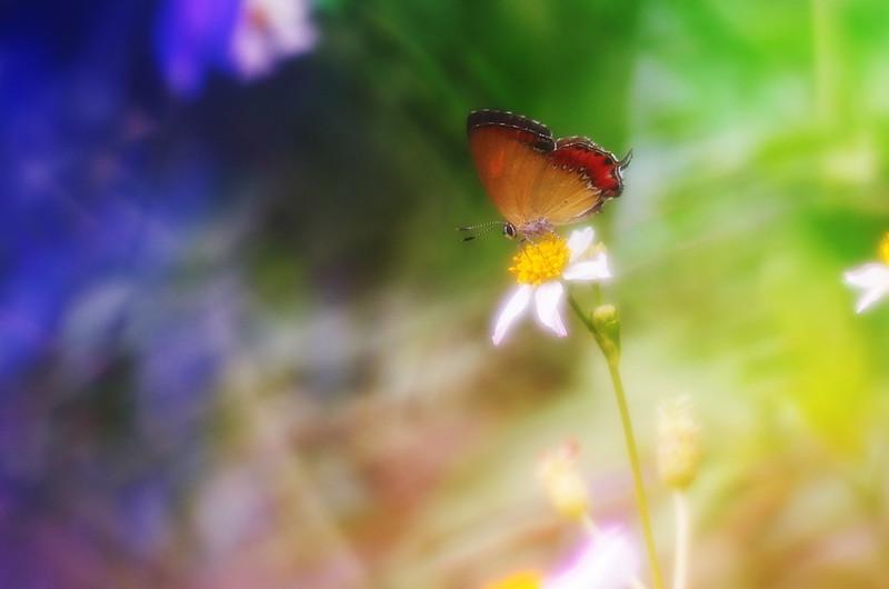 色彩班爛的蝴蝶