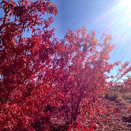 Such vibrant colors of #fall are all around #Denver now! #autumn #leaves