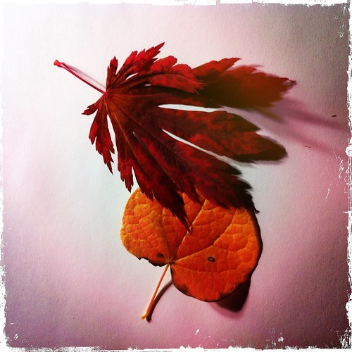 autumn color fall photography photo all foliage japanesemaple rights llc redbud iphone cerciscanadensis rosenoff dancingpeacock iphoneography hipstamatic reservedpacifica ©2012 20121016 ajaponicumaconitifolium