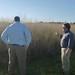 Clemson Switchgrass