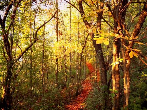 autumn forest dunnville panoramafotográfico photographyforrecreation rememberthatmomentlevel4 rememberthatmomentlevel1 rememberthatmomentlevel2 rememberthatmomentlevel3 rememberthatmomentlevel9 rememberthatmomentlevel5 rememberthatmomentlevel6 rememberthatmomentlevel10