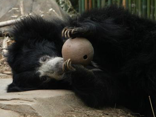 Shop for the Holidays and Support the Smithsonian's National Zoo