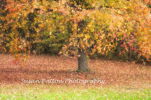 wFallen_leaves