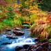 couleurs d'automne... ©Mick Cam