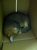 Quintus fast asleep in his box at eclau by Stephanie Booth