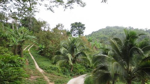 Koh Samui Mountain サムイ島の山にて (34)