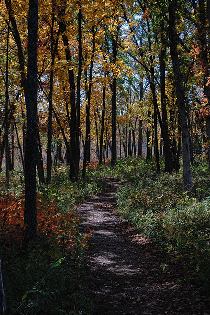 Shaw Nature Reserve (the Arboretum), in Gray Summit, Missouri, USA - forest path