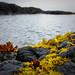 Small photo of Brilliant Intertidal Plant Life