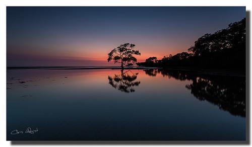 reflection tree sunrise australia brisbane queensland nudgeebeach 1740f40l canon5dmklll