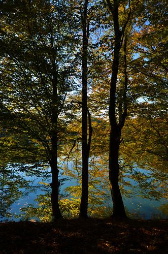 trees lake reflection lago nikon árboles europa europe hungary budapest streetphotography lagoon reflejo laguna nikkor f4 easterneurope magyarorszag hungría 1635 europadeleste documentaryphotography fotografíadocumental d7000 fotografíacallejera 1635f4 nikond7000 nikon1635f4 nikkor1635f4