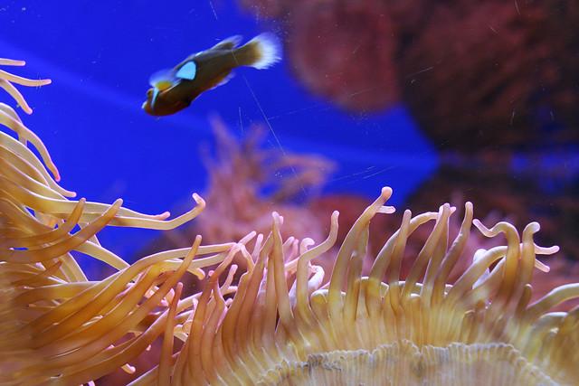 Aquariums at the Denver Zoo