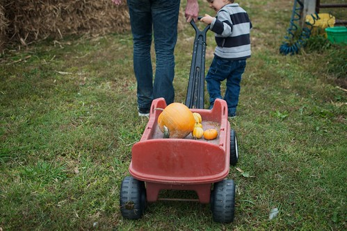 Pumpkins in wagon