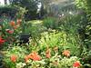 Joy - Mother's Garden - Moorefield