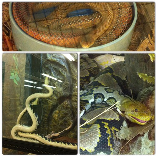 My morning at the Snake Farm & Petting Zoo with my 3 year old nephew. #instacollage #snake #snakes