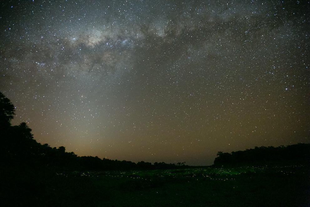 Una toma de larga duración permite observar la vía láctea mientras sobre los camalotes cientos de luciernagas sobrevuelan el río. (Tetsu Espósito)