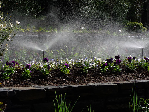 Sprinklers and pansies