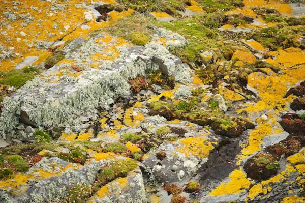 RYALE_Patagonia-12