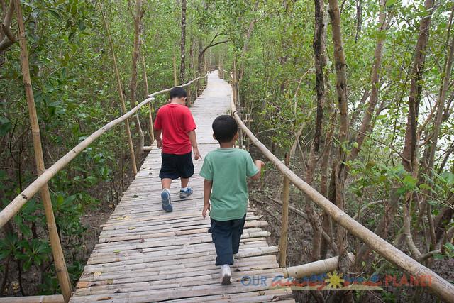 Bakhawan Eco-Park-19.jpg