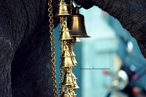 "street india elephant bells temple ganesha nikon soe pondicherry southindia indiatravel laxmi puducherry discoverindia ""nikonflickraward"" ""flickraward"" nikond5100"