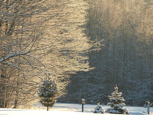 trees winter white snow black mi contrast fluffy fernridge january2013