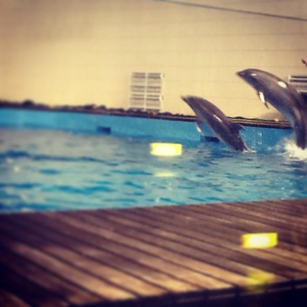 fakieh aquarium Jeddah $ Flickr - Photo Sharing!