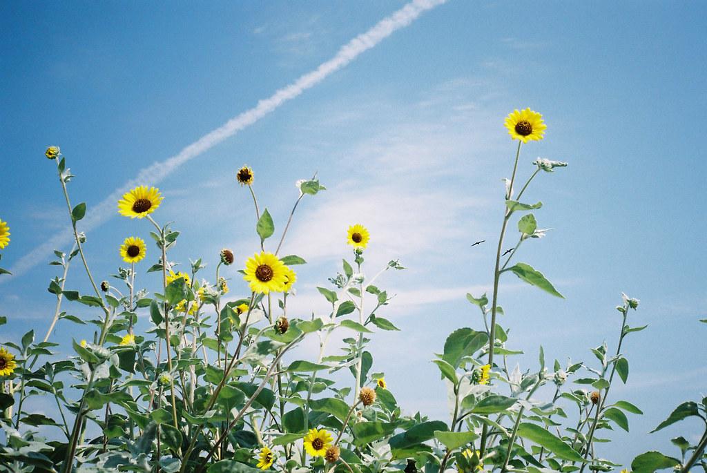 日間賀島の夏空