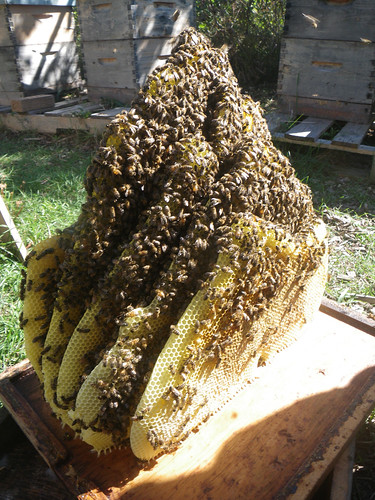 natural comb extending two brood boxes