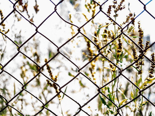 weeds by the fence