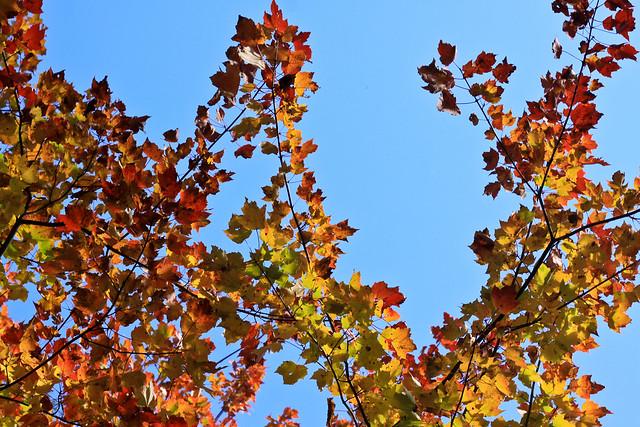 L'automne 3 couleurs