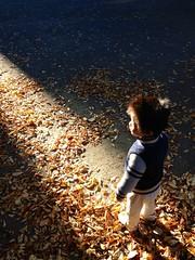 朝散歩 (2012/11/10)