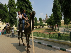 Mysore Palace camel ride