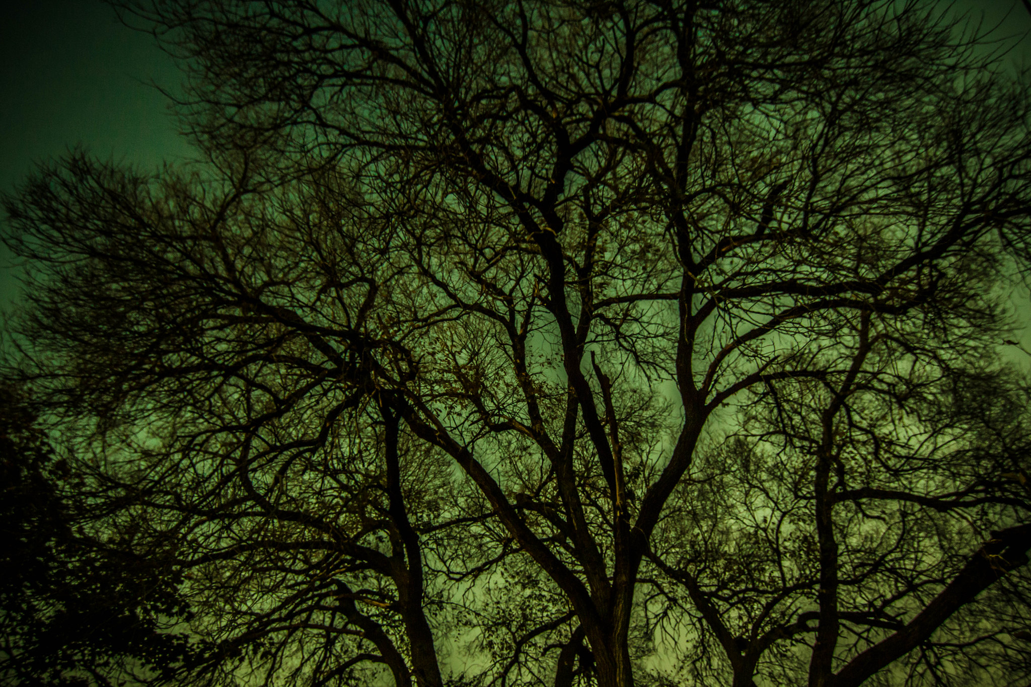 tree silhouette with green background