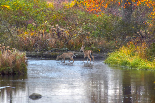 morning autumn usa fall water colors mi river michigan deer concord 4autumn
