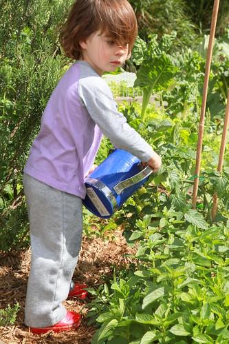 6 Waverley Community Garden