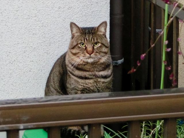 Today's Cat@2012-11-24