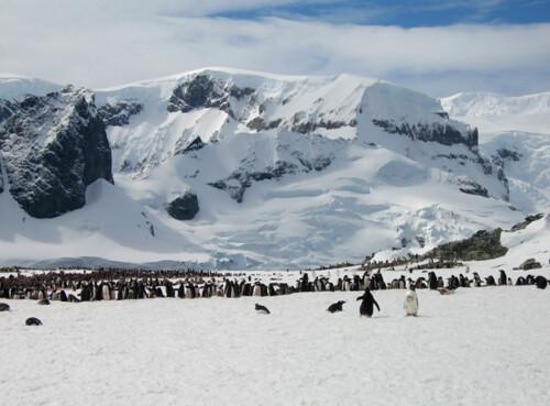 Nahila Hernandez Antartica Last Desert 2012